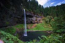 A view of South Falls in Silver Falls State Park in Oregon by Danita Delimont