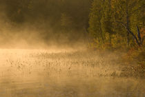 Sunrise mist on pond in autumn von Danita Delimont