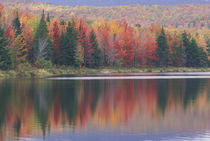Mirror reflection of autumn colors by Danita Delimont