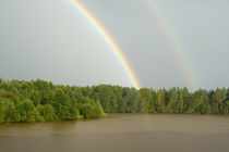 Double rainbow over the forest von Danita Delimont