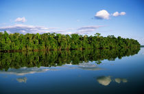 Forested river bank reflected in the water with clouds in the sky by Danita Delimont