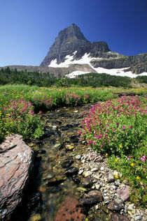 Wild flowers and Mount Reynolds von Danita Delimont