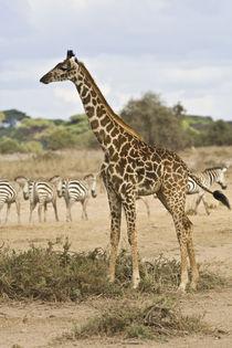 Kenya von Danita Delimont