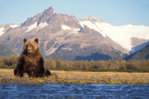 Katmai National Park on the Alaskan peninsula by Danita Delimont