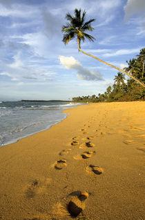 Beach Puerto Rico von Danita Delimont