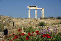 Column ruins by Danita Delimont