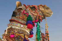 1st Place Winning Camel at the Camel FAIR von Danita Delimont
