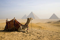 000-year-old pyramids built as necropolis tombs for deceased pharaohs by Danita Delimont