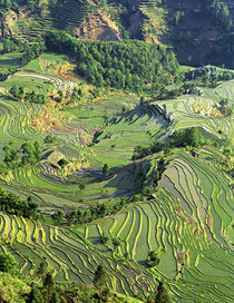 Pattern of green rice terraces at Laohu Zui (Tiger's Mouth) by Danita Delimont
