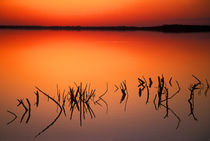 Silhouettes of dead tree branches protrude through water on Lake Apopka at sunset von Danita Delimont
