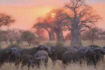 african sunset 6 von Leandro Bistolfi