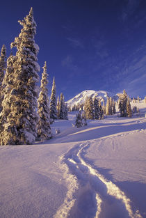 Snowshoe tracks in the Paradise area by Danita Delimont