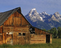 A weathered wooden barn along Mormon Row with the Grand Tetons in the distance von Danita Delimont