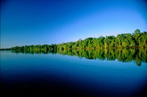 Forested river bank reflected in the water with no clouds in the sky von Danita Delimont