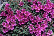 Wildflowers von Danita Delimont