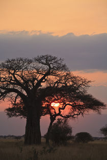 african sunset by Leandro Bistolfi