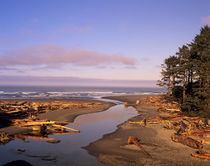 Kalaloch Beach and Kalaloch Creek by Danita Delimont