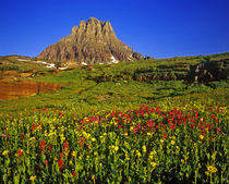 Alpine wildflowers at Logan Pass in Glacier National Park in Montana von Danita Delimont