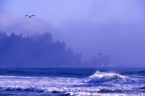 Fog veils Pacific Ocean coast headlands at Second Beach von Danita Delimont