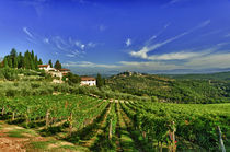 The vineyards of Castello di Verrazzano by Danita Delimont
