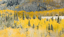 Medicine Bow Mountains and National Forest von Danita Delimont