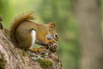 Squirrel von Danita Delimont