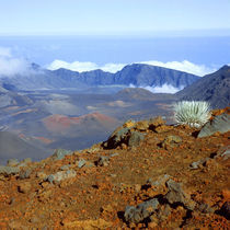 Silversword on Haleakala Crater Rim from near Visitor center von Danita Delimont