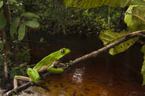 Guyana by Danita Delimont