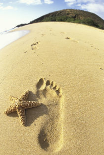 Footprint and starfish in sand von Danita Delimont