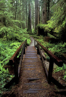 Bridge over stream and redwoods von Danita Delimont