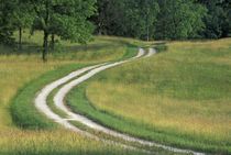 Road winding through meadow von Danita Delimont