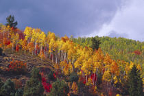 Logan Canyon in Utah in autumn with passing storm by Danita Delimont