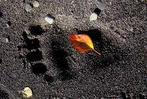 Brown bear pawprint in sand at Brooks Camp von Danita Delimont
