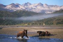 Alaskan peninsula by Danita Delimont
