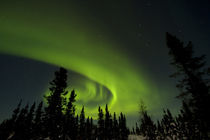 View of aurora borealis and silhouette of trees by Danita Delimont