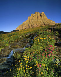 Alpine wildflowers & Mt Clements at Logan Pass in Glacier National Park Montana by Danita Delimont