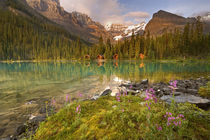 Lodges and forest reflect in Lake Ohara at sunset by Danita Delimont