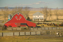 Pincher Creek: Red Barn & Ranch by Danita Delimont