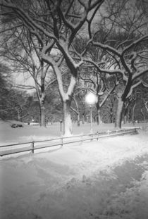 Covered promenade in Central Park by Danita Delimont