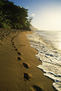 Footprints in sand by Danita Delimont