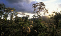 Setting sun lights rainforest lining rim of Ngorongoro Crater von Danita Delimont