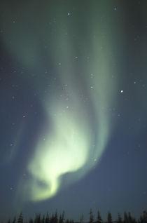 Aurora borealis von Danita Delimont