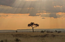 The sun rays lasering through the afternoon storm clouds in the Maasai Mara Kenya by Danita Delimont