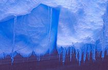Antarctica: Blue Icebergs von Danita Delimont