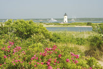 View across beach grases and flowers towards Edgartown Light and Harbor by Danita Delimont
