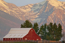 Bright red barn against Mission Mountains in Montana von Danita Delimont