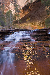 Archangel cascades in the Left Fork of the Virgin River in Zion National Park in Utah in autumn by Danita Delimont