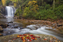 Looking Glass Falls in the Pisgah National Forest in North Carolina by Danita Delimont