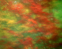 Abstract of maple trees seen through rainy windshield by Danita Delimont