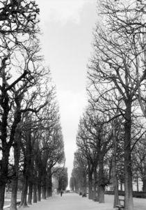 Boulevard Saint Michel von Danita Delimont